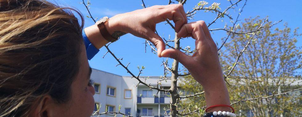 Baumpatenschaft bei Otto